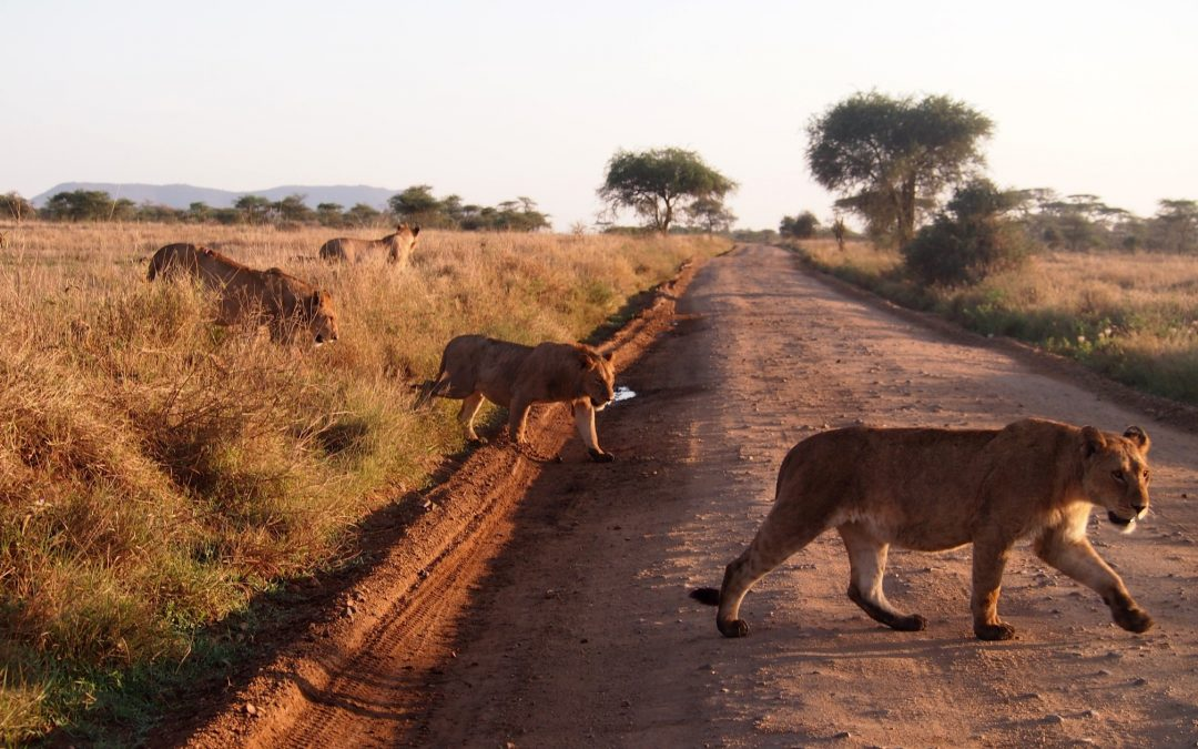 Un voyage en Tanzanie, un moyen de se rapprocher de la nature.